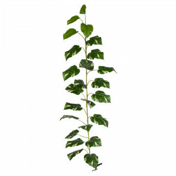 pothos rank xl