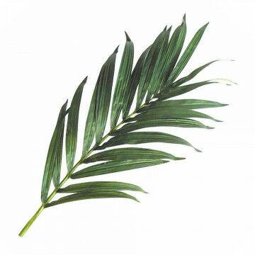 palmblad kentia