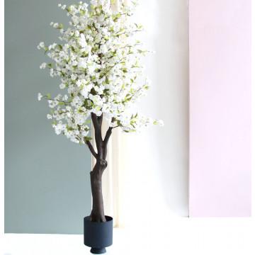Bloesemboom wit, in donkerblauwe plantenbak