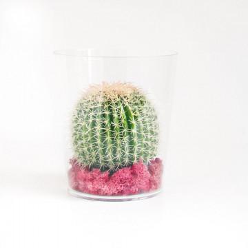 Origenele cactus display