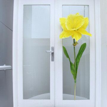 Reuze Narcis voor op het raam