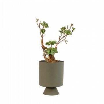Vetplant op stam met plantenpot tambor