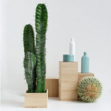 Displayset blankhout met 2 cactussen