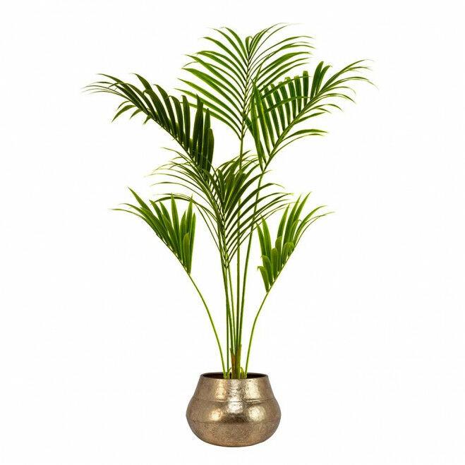 Kentia palm met ronde bloempot