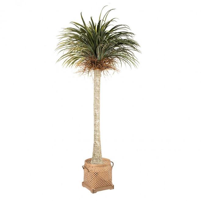 Yucca boom met mand sumatra