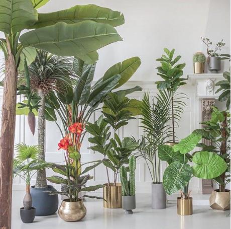 Winkeldecoratie planten