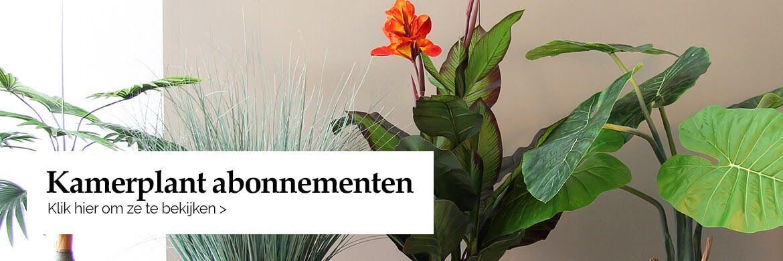 Plant abonnementen